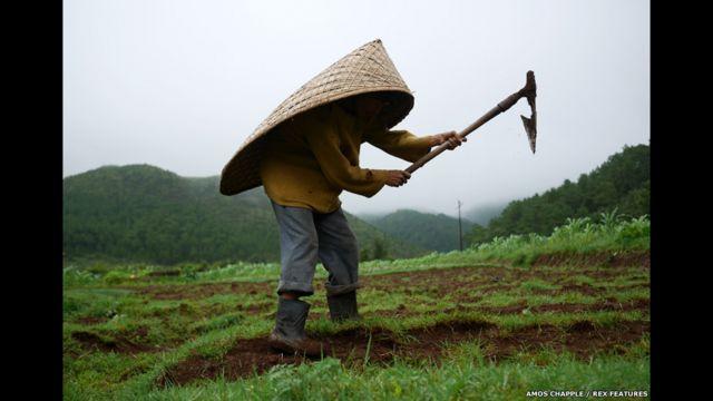 Agricultor sob seu 'knup' trabalha na terra em Mawsynram. (foto: Amos Chapple / Rex Features)