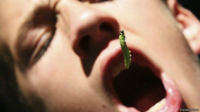 Desafio para quem vende insetos como comida é superar o nojo dos clientes