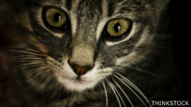 Según el neurobiólogo John Allman, los ojos al frente son beneficiosos para las criaturas que cazan de noche.