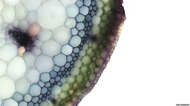 O artista Rob Kesseler se dedica a explorar a beleza dos vegetais que escapa ao olho humano (Rob Kesseler)