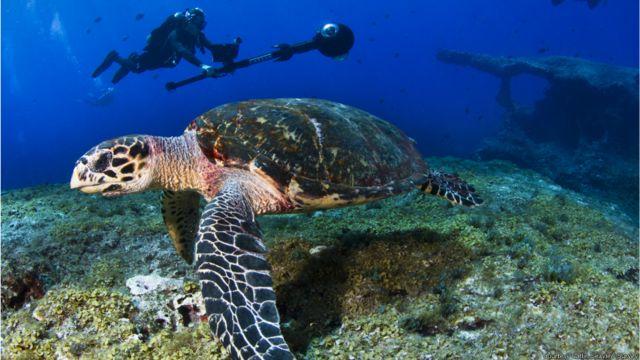 Projeto faz parte de esforço do Google Maps para mapear todos os cantos - inclusive os subaquáticos - do mundo.