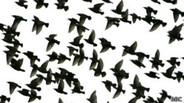 Las aves no se suicidan, aclaran los científicos.