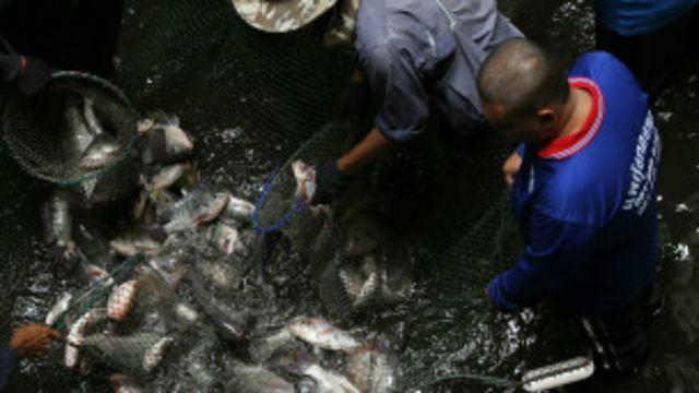 ထိုင်းငါးဖမ်းလှေ ကုမ္ပဏီမှာ လှေလုပ်သား အဖြစ် လုပ်ဖို့ မြန်မာ အလုပ်သမားတွေကို တရားမဝင် ခေါ်ယူဖို့ ကြိုးစား