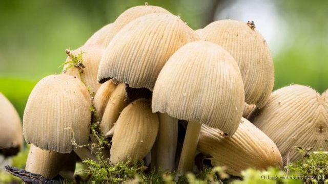 Apenas 7% dos fungos do planeta foram identificados, segundo cientistas