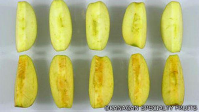 Rodajas de manzanas genéticamente modificadas y comunes