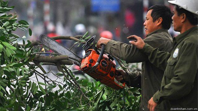 Vụ chặt cây ở Hà Nội