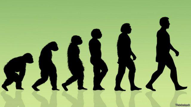 Модель эволюции