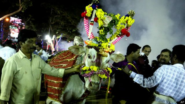 भारत, गाय