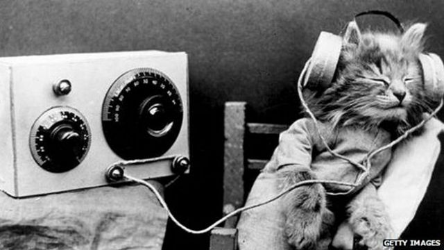 Gato escuchando una radio antigua