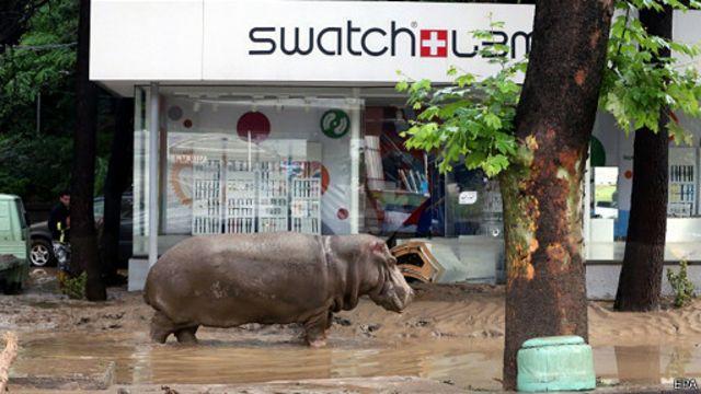 سیل باعث شد تا تعدادی از حیوانات خطرناک باغ وحش تفلیس آزاد شوند و به مرکز شهر بیایند