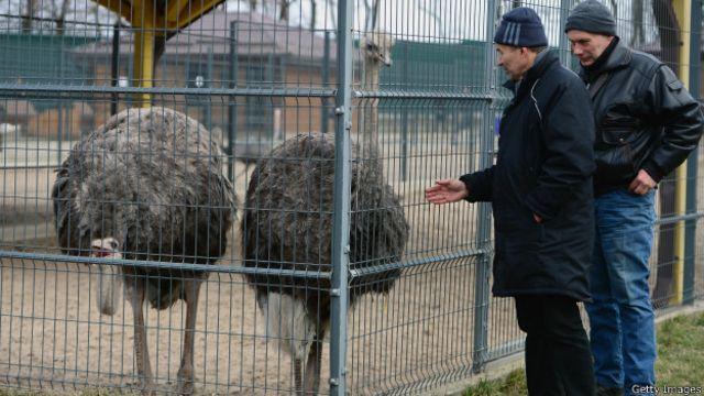 """На территории бывшей резиденции президента Виктора Януковича """"Межигорье"""" живут страусы"""