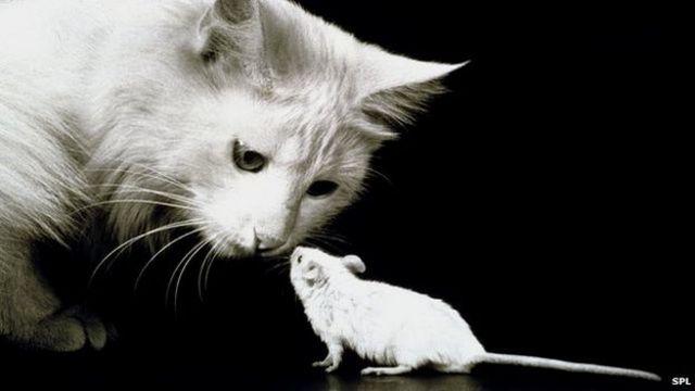El Arma Secreta De Los Gatos Para Cazar Ratones Bbc News Mundo