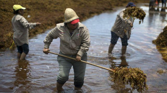 Deshacerse de semejante cantidad de algas no es tarea fácil.