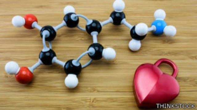 Incrementa la dopamina, una sustancia química producida por el cerebro y relacionada con el apetito.