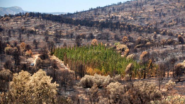 Dos mais de 940 ciprestes mediterrâneos da plantação do projeto CypFire em Valência, só 1,27% foi queimado no incêndio que aconteceu ali em 2012. Todas as outras espécies foram devastadas