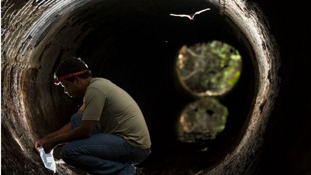 Pesquisador da UFES Áureo Banhos em trabalho para adaptar os dutos de água fluvial para passagem de fauna; ao alto, um morcego passa pela manilha: ao menos 47 espécies desse mamífero já foram atropeladas na rodovia