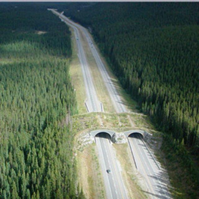 Estrutura para passagem superior de fauna construída no parque nacional Banff, no Canadá