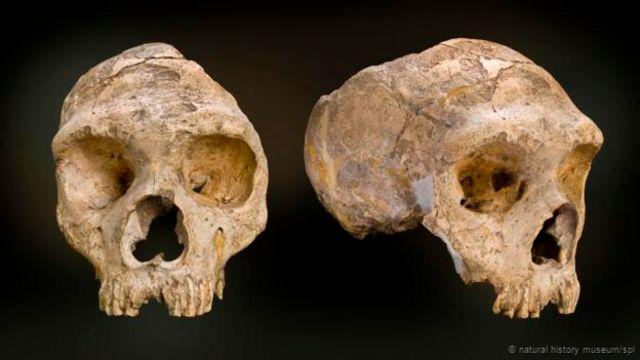 Fósiles de Neandertales