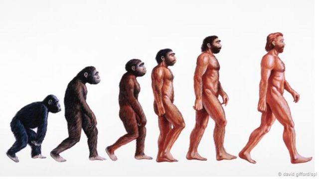 Representación de la evolución humana