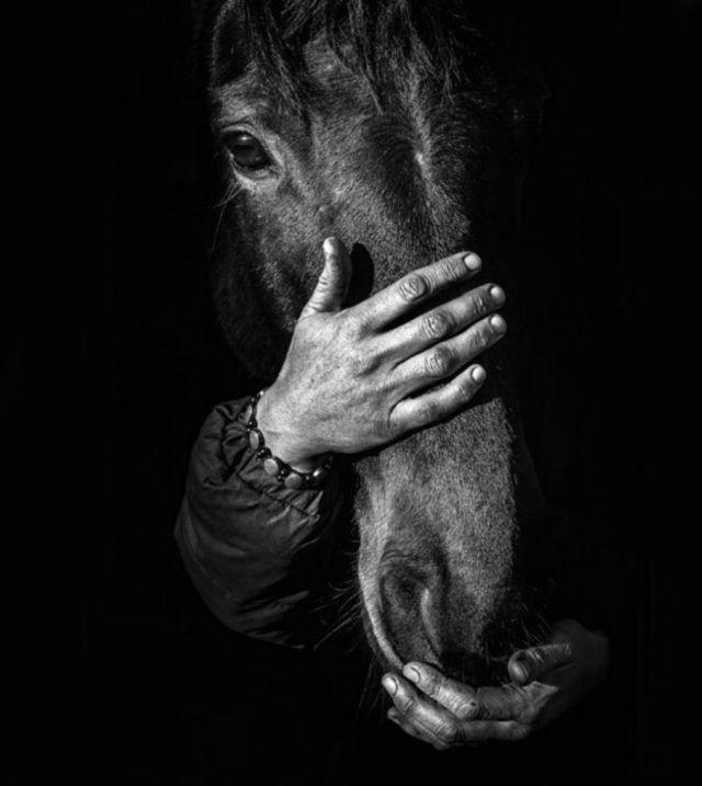 Les mains de la dresseuse de chevaux Connie Colfox