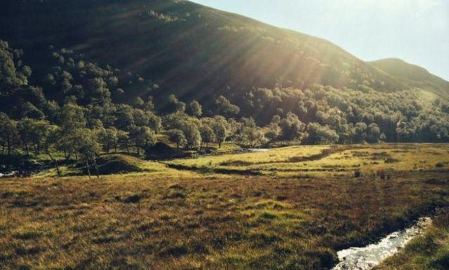也有人喜歡狼群再次在蘇格蘭高地生活