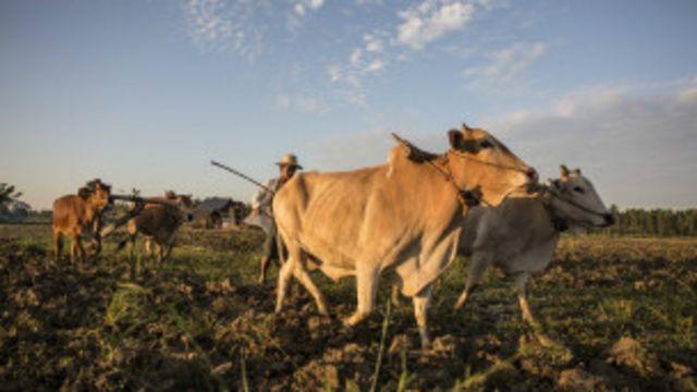 လယ်သမားတွေအတွက် ကတော့ စိုက်ပျိုးရေး အရေးကြီး။