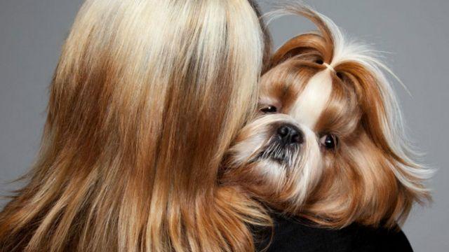 O fotógrafo Gerrard Gethings retrata cães e seus donos em concursos de beleza animal