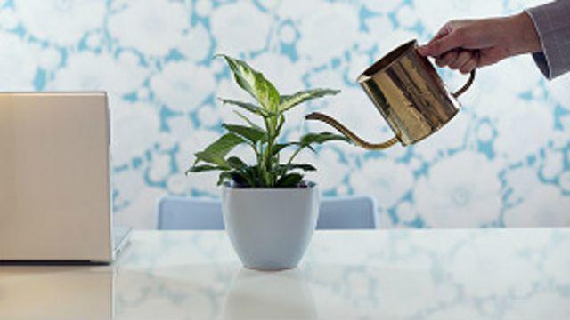Las recomendaciones tomaron en cuenta la disponibilidad de las plantas en el mercado.
