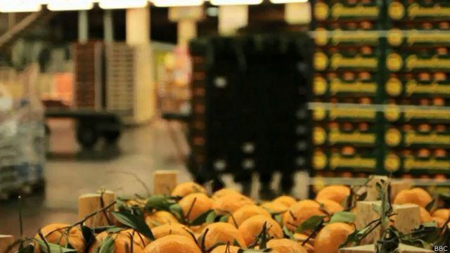 इटली, बोलोनिया, सौर ऊर्जा, फल-सब्ज़ी बाज़ार