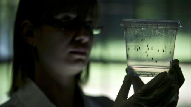 Diversas pesquisas tentam evitar transmissão de doenças por mosquitos