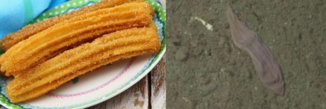 """به """"جوراب بنفش""""، نام علمی جنبنده عجیب چورو داده شده است. چورو نوعی شیرینی اسپانیایی است که در تصویر دیده میشود. عکس: MBARI"""