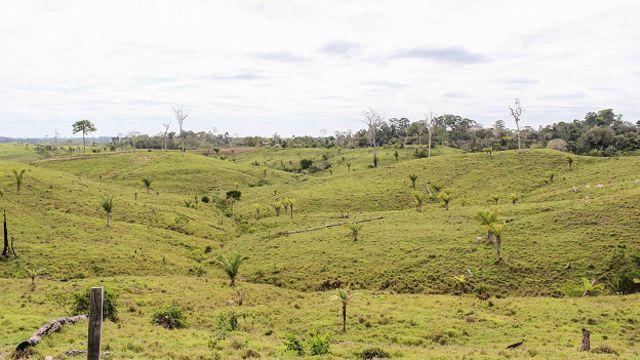 La pesadilla de Andrés Ruzo: la selva perdida.