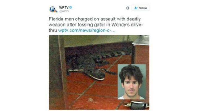 Buaya aligator