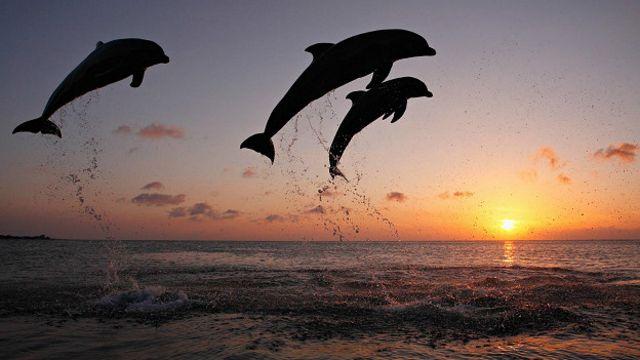Дельфины! Какое чудо!
