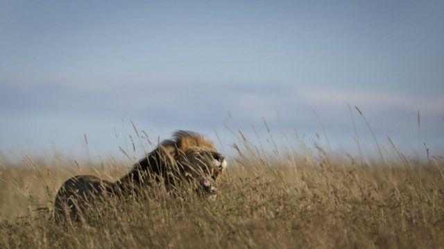 Singa Kenya