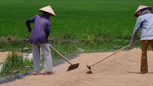 Xâm nhập mặn sẽ đe dọa vụ lúa xuân hè của nông dân miền Tây Nam Bộ
