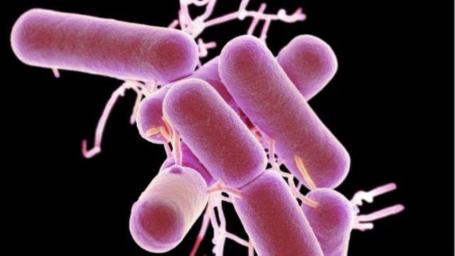 Lactobacillus bacterias producen ácido láctico a través de la fermentación de los hidratos de carbono; son hostiles a las bacterias que causan enfermedades.