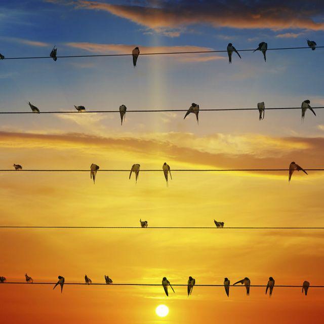 ¿Qué pasa con las aves al final de su vida? ¿Por qué hay aves que se suicidan en India y otras que estallan en Nevada?