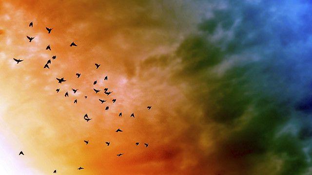 Viven en el cielo pero al morir, caen.
