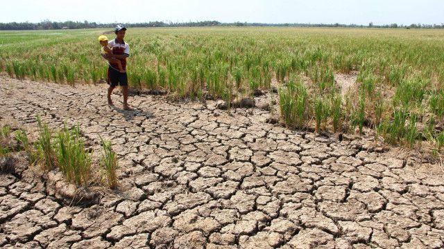 Tại Việt Nam, nhiều tháng qua, Đồng bằng sông Cửu Long đã chịu rất nhiều thiệt hại vì xâm nhập mặn và hạn hán