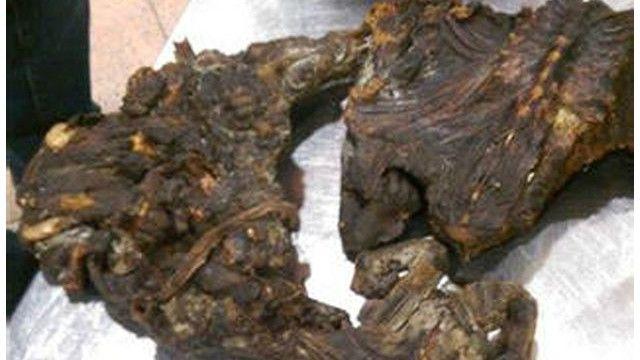 چندین کیلوگرم گوشت میمون در فرودگاه زاونتم بروکسل کشف شد