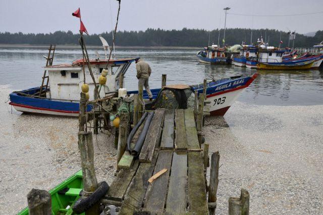 Sardines muertas en el sur de Chile.