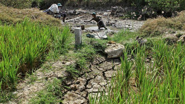 Một phần của việc bị xâm nhập mặn của đồng bằng sông Cửu Long được cho là vì vùng đất này dần sụt lún