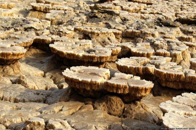Estructuras naturales con forma de hongos.
