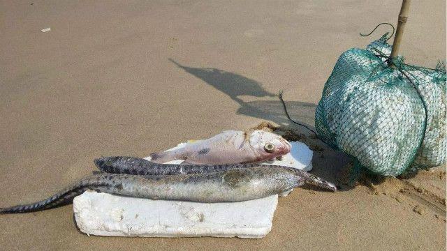 Hình ảnh cá chết người dân ghi lại từ Quảng Bình