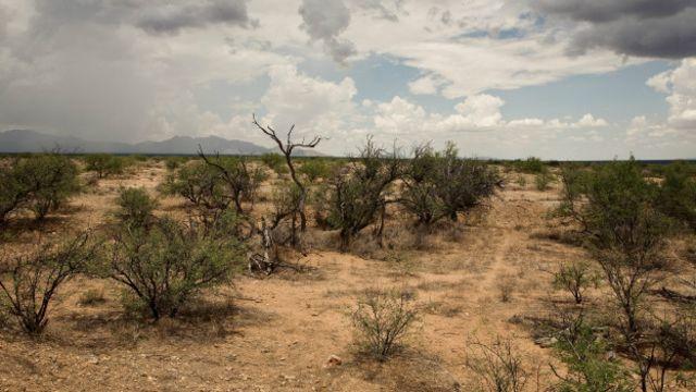 Desierto (Foto: Michael Wells)