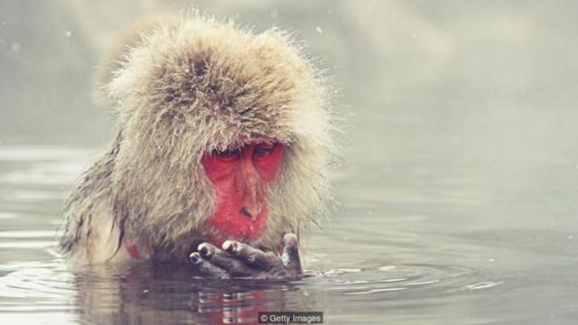 指尖起皱有可能帮助了我们的灵长类祖先在潮湿的环境下更好的抓握。(图片来源:Getty Images)