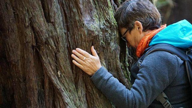 Киви Вики Киан напитывается энергией от старой калифорнийской секвойи в округе Сонома (штат Калифорния, США)