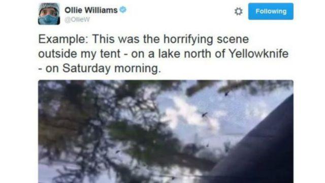 Gazeteci Ollie Williams'ın hafta içinde paylaştığı, çevresindeki sineklerin ne kadar çok olduğunu anlattığı Twitter mesajı.