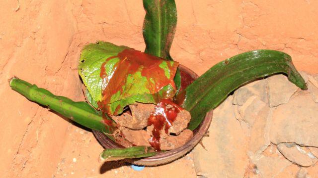 Le crâne du défunt doit être recueilli dans une calebasse en terre cuite ...